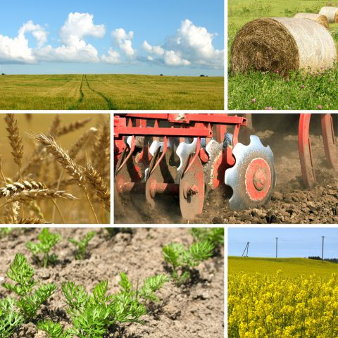 9192895 - agriculture collage